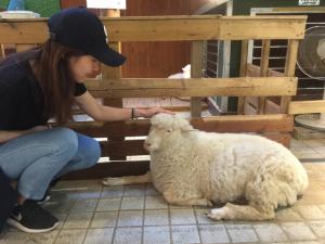 Sheep Café